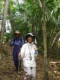Lush Jungle Trail - El Peru Photo Gallery - Maya Expeditions
