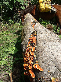 Horse and Fungi on trail Dos Pilas - Maya Expeditions