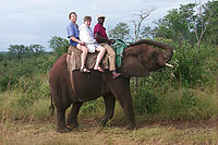 African Elephant Ride - Victoria Falls, Africa - Maya Expeditions