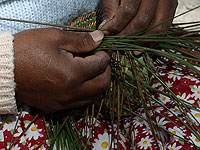 Raramuri women weaving a Pine needle basket weaving - Copper Canyon Adventures - Maya Expeditions