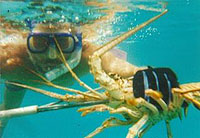 Sailing on Las Sirenas Lobster Hunting - photo by Aventuras Vacacionales, S.A.