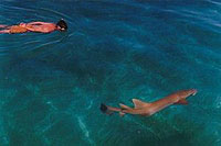 Sailing on Las Sirenas Swimming with Shark - photo by Aventuras Vacacionales, S.A.